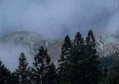 rice-terraces-fog