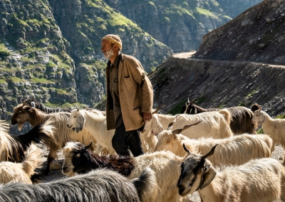 SHEPHERD IN SPITI VALLEY