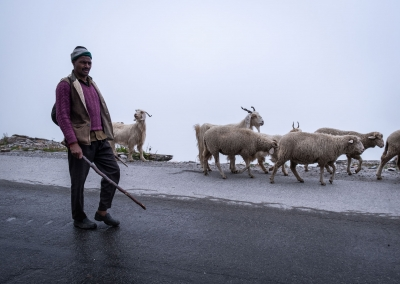 SHEPHERD IN RHOTANG PASS