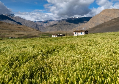 langza-fields-spiti-valley