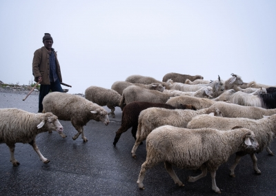 shepherd-at-rhotang-pass-manali