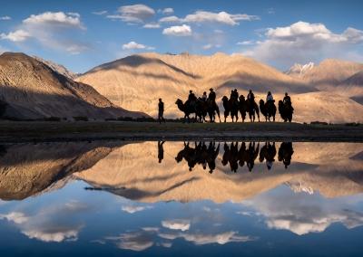 camels-reflecion-nubra-valley-ladakh