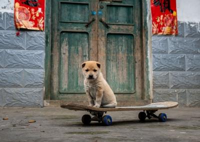 cute-dog-yangshuo