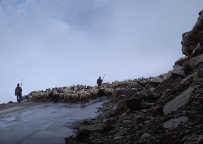 shepherds-road-rhotang-pass