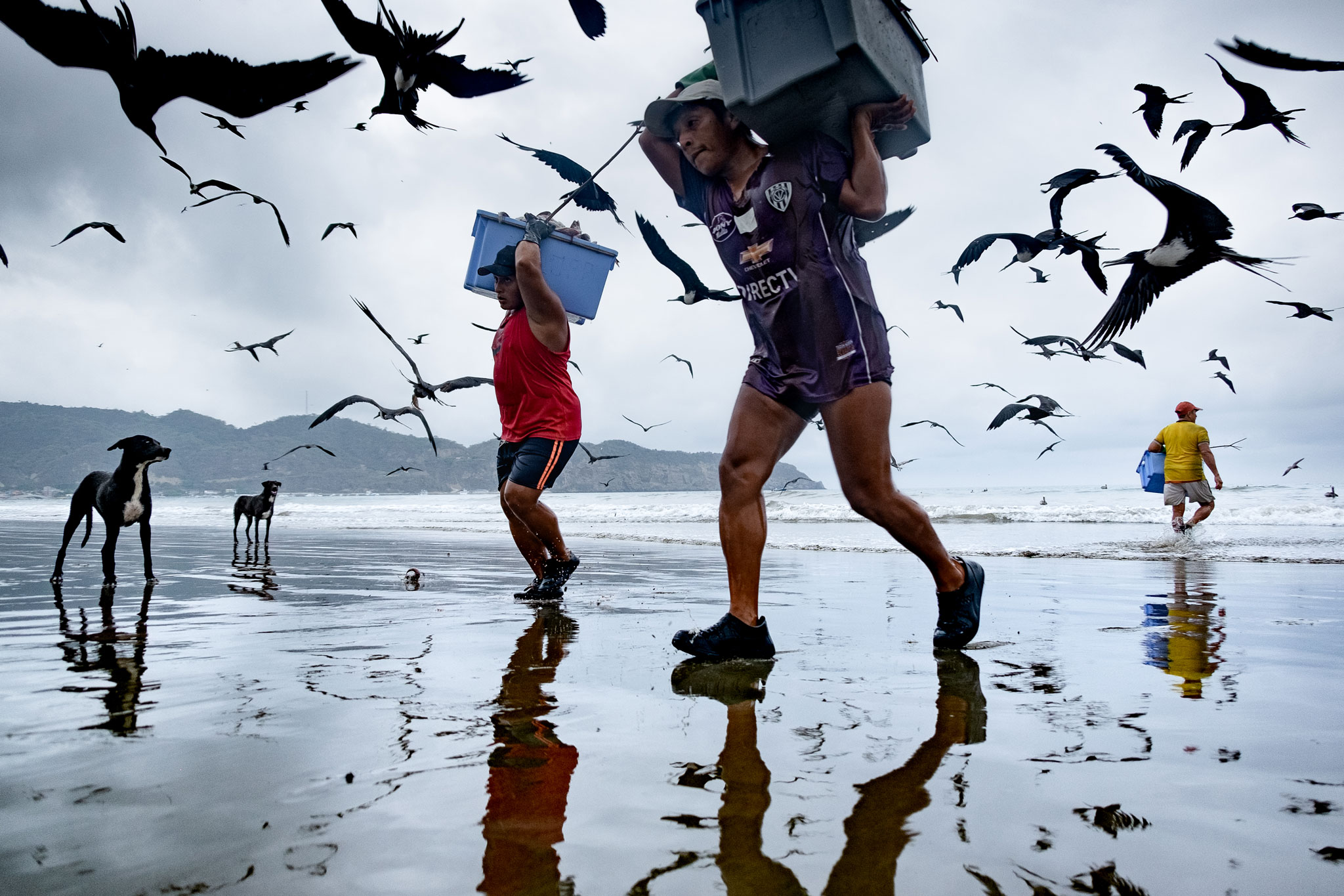 ECUADORIAN FISHERMEN CARRYING BASKETS FULL OF FISH