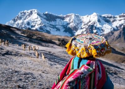 QUECHUA WOMAN WITH HER HERDS OF ALPACAS - AUSANGATE REGION - PERU