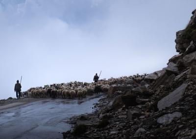 SHEPHERDS ON THE ROAD - HIMACHAL PRADESH - INDIA