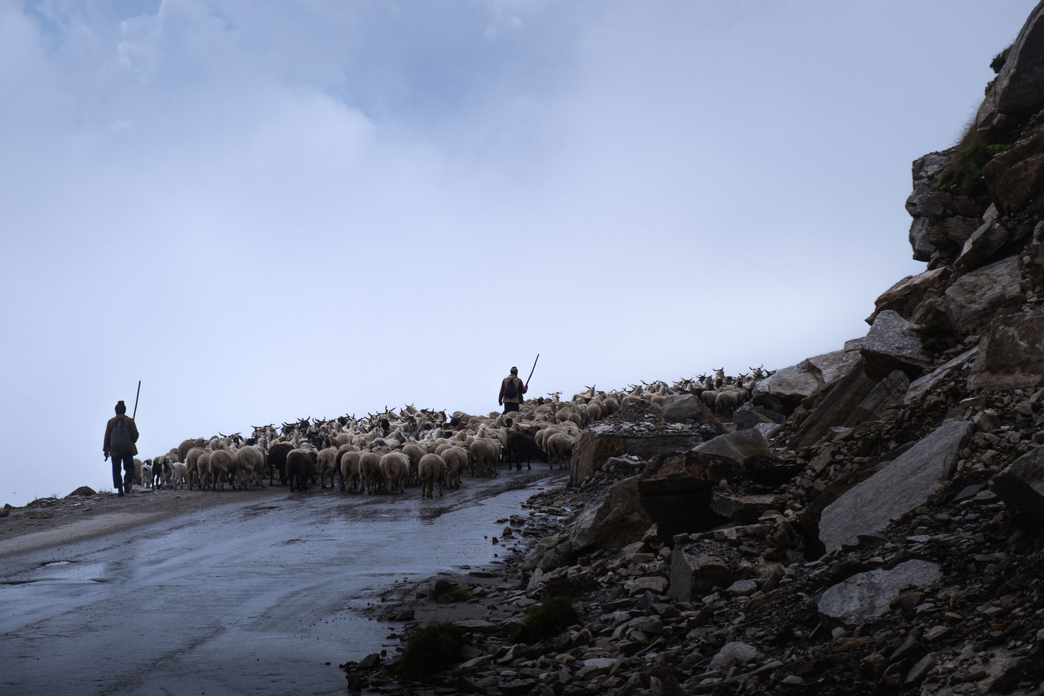 SHEPHERDS ON THE ROAD - HIMACHAL PRADESH - INDIA