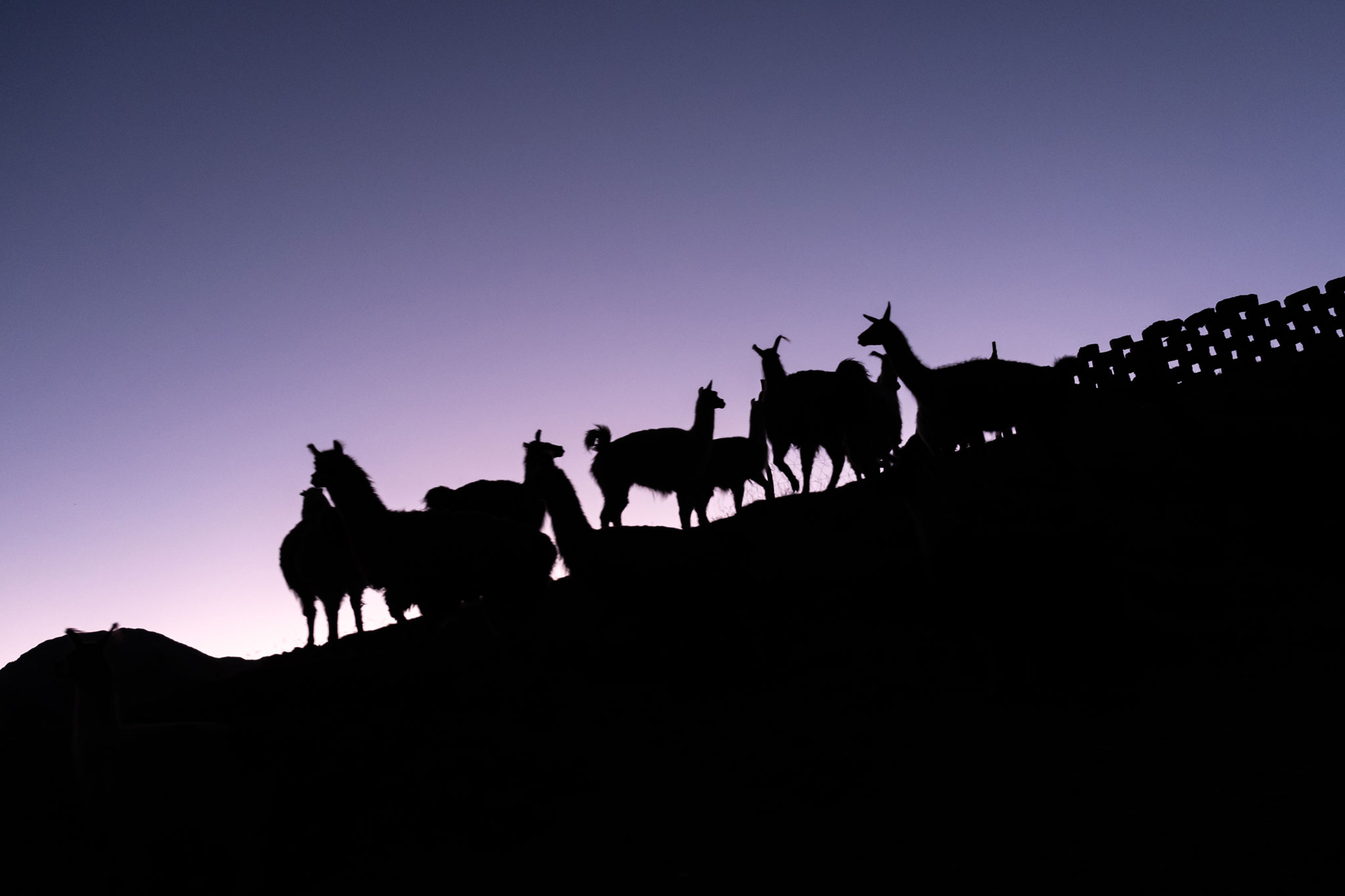 SILHOUETTE OF LAMAS IN PERU