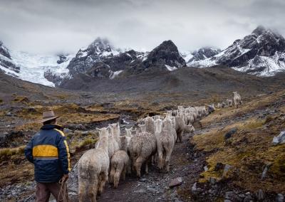 THE PERUVIAN SHEPHERD