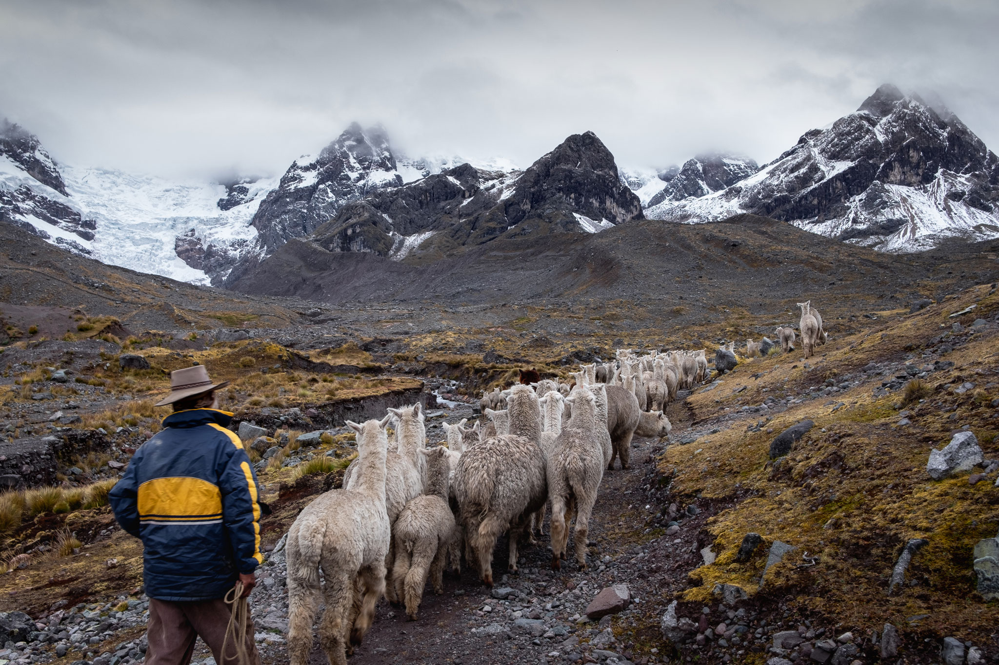 THE PERUVIAN SHEPHERD