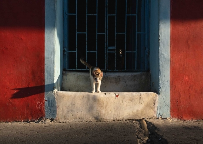 cartagena-street-cat