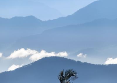 palm-tree-sierra-nevada-colombia