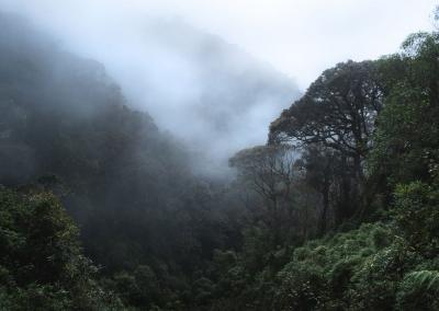 cloud-forest-parque-de-los-nevados