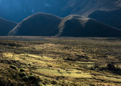 parque-de-los-nevados-landscape