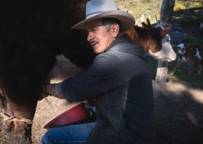 vaquero-ordeñando-vacas-parque-de-los-nevados