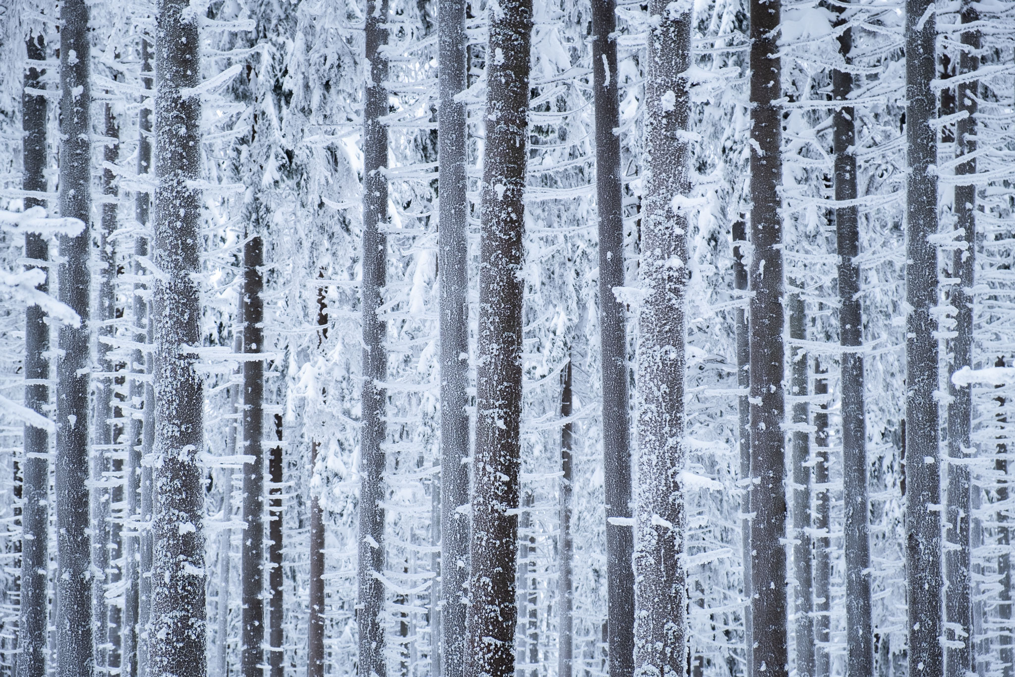 ABSTRACT-FROZEN-FOREST-POLAND