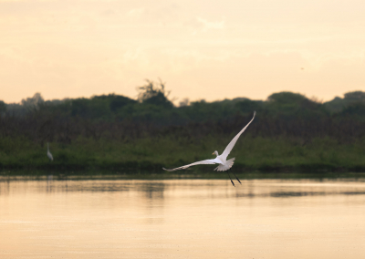 bird-cienaga-mompox-colombia