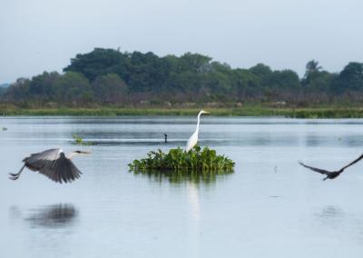 birds-cienaga-colombia-mompox