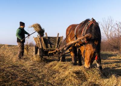 farmer-zywiec-poland