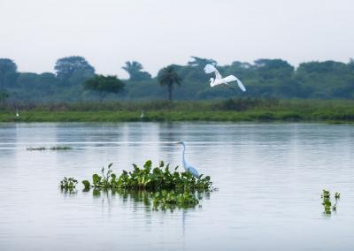 fauna-cienaga-mompox-colombia