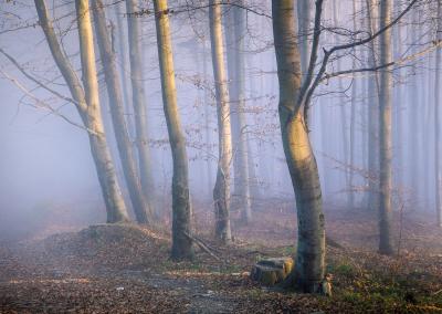 fog-and-forest-poland-zywiec
