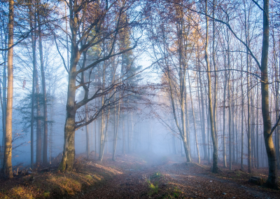 foggy-colorful-forest-poland