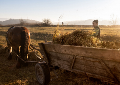 polish-farmer-working