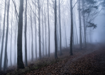 walking-in-a-foggy-forest-autumn-poland