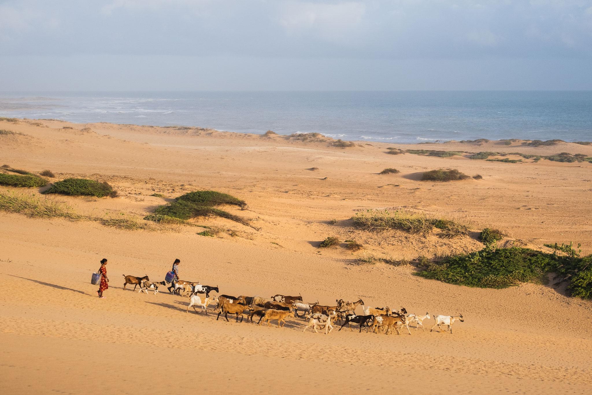 wayuu-indigenous-people-shepherds-guajira-colombia