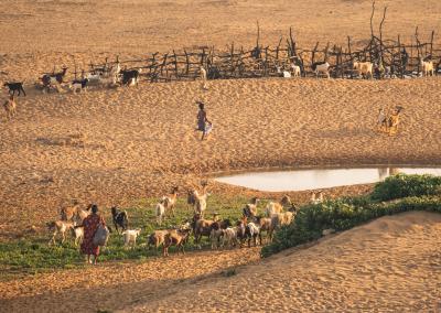wayuu-shepherd-desert-guajira