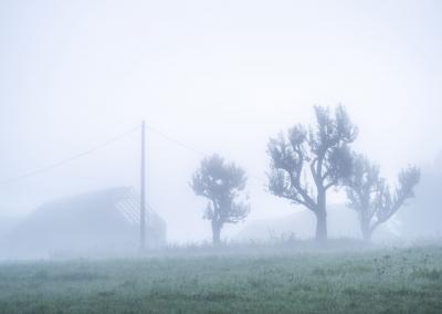 zywiec-foggy-morning