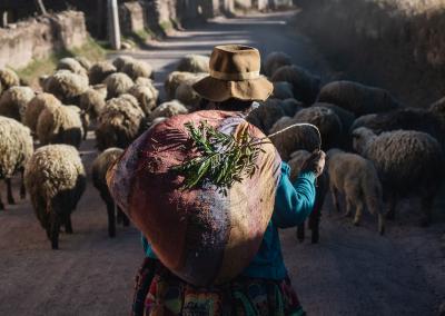 quechua-herder-peruvian-andes