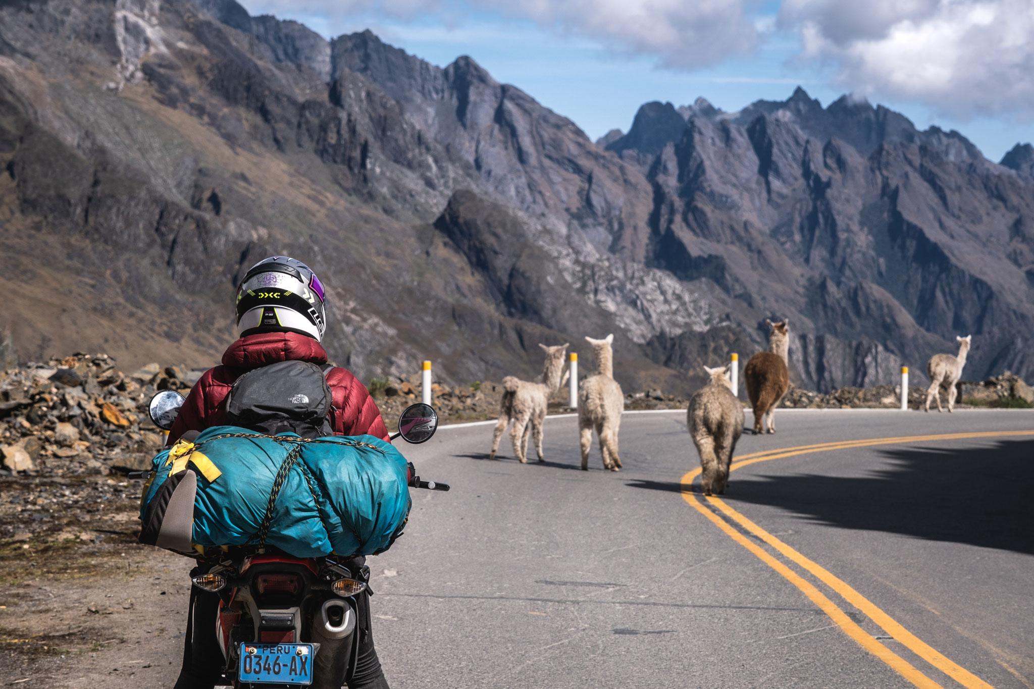 riding-with-alpacas
