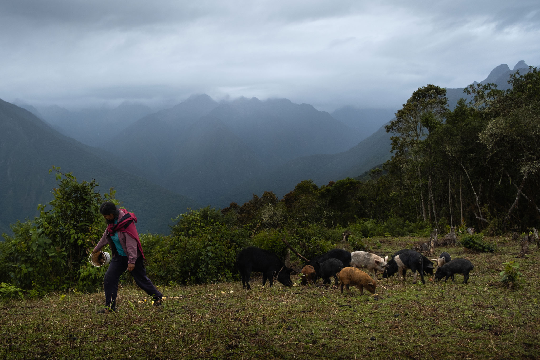 saturnina-feeding-the-pigs-peru