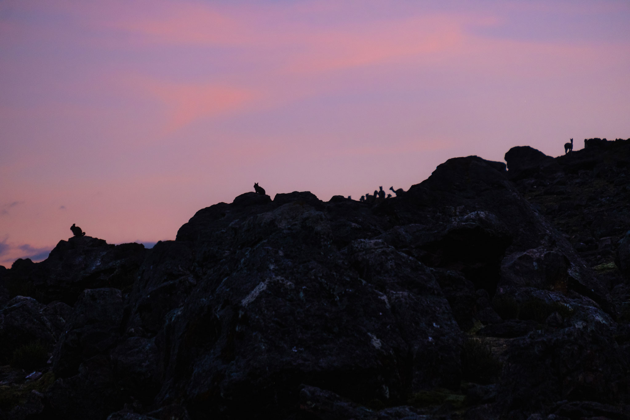 vizcacha-llama-silhouettes