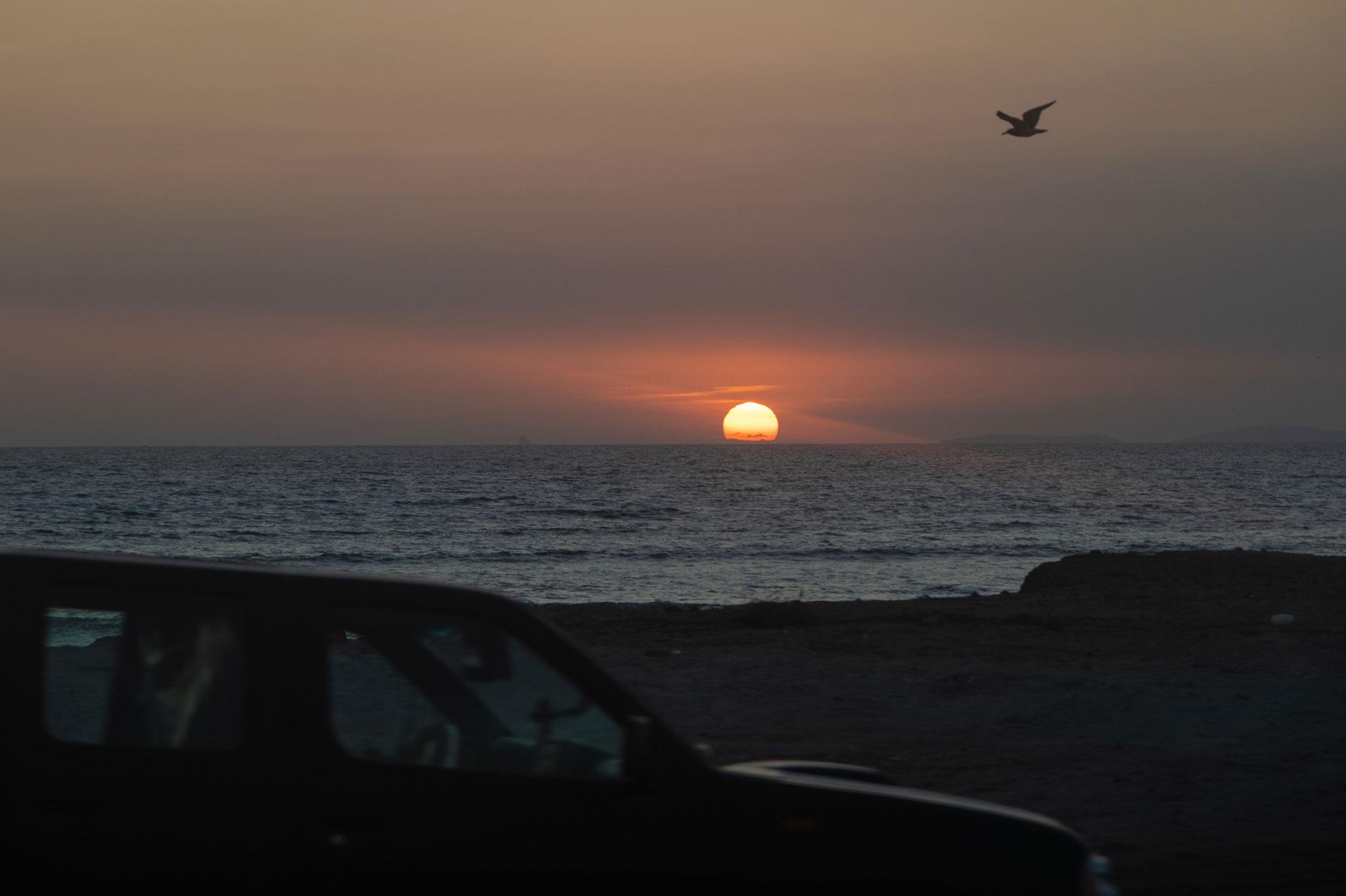 car-and-bird-panamericana-peru