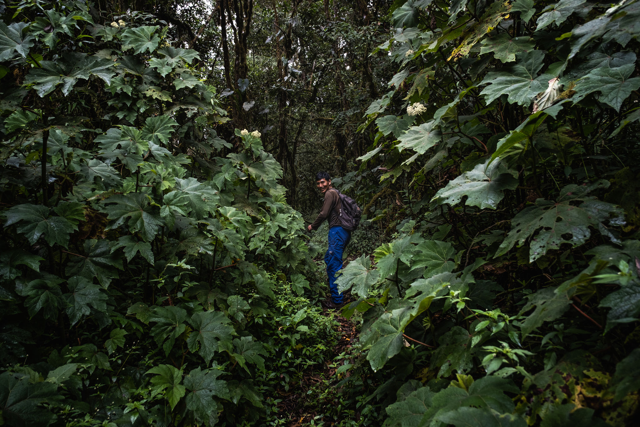 cesar-guiding-me-in-the-jungle