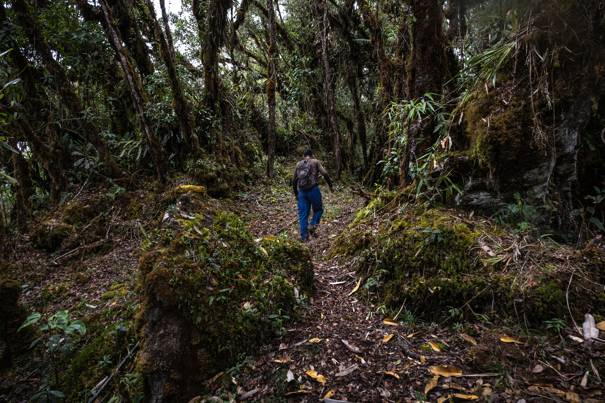 cesar-walking-in-the-cloud-forest