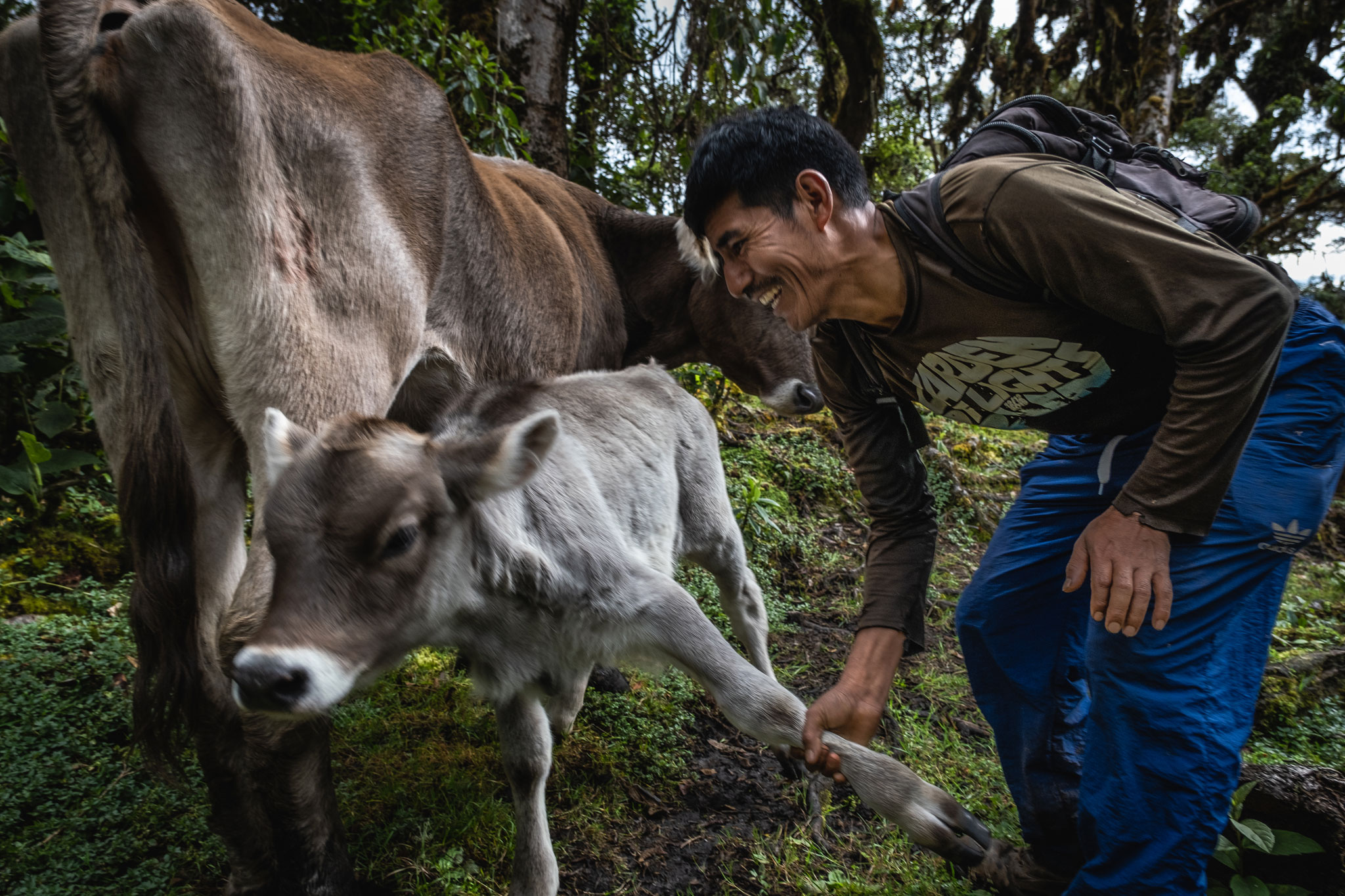 cesar-with-his-cows