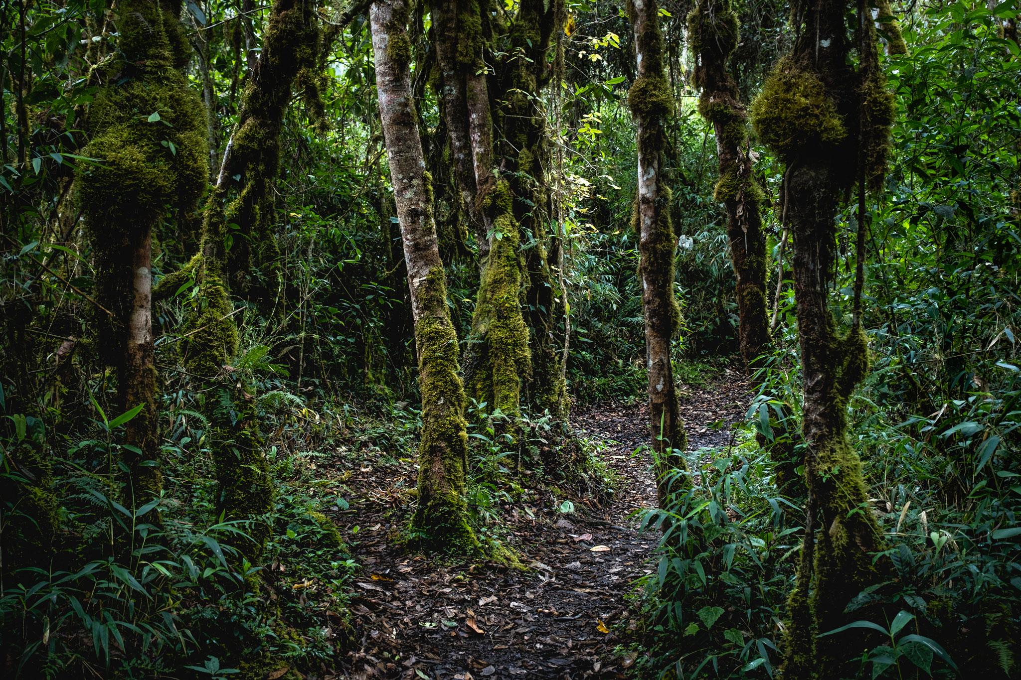 cloud-forest-llaqtapata-peru