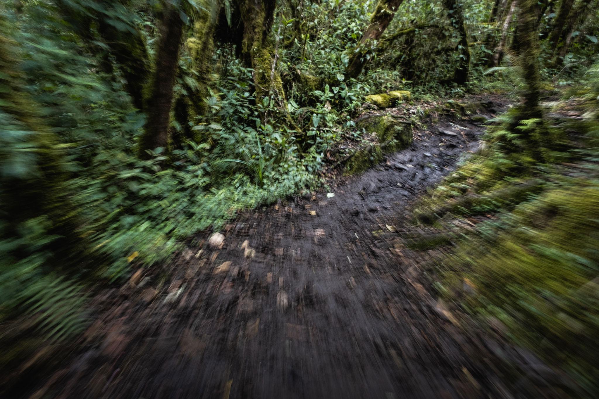 running-in-the-cloud-forest-llaqtapata-peru
